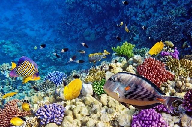 Corales y peces del Acuario de Barcelona