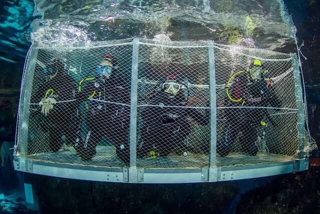 Bucear con tiburones en el acuario de Barcelona