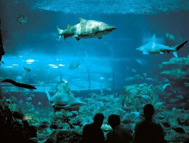 Visita al acuario de Barcelona