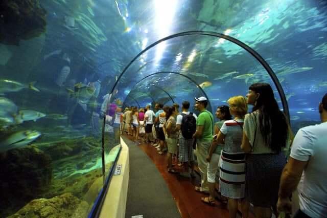 Atracciones del Acuario de Barcelona - Túnel