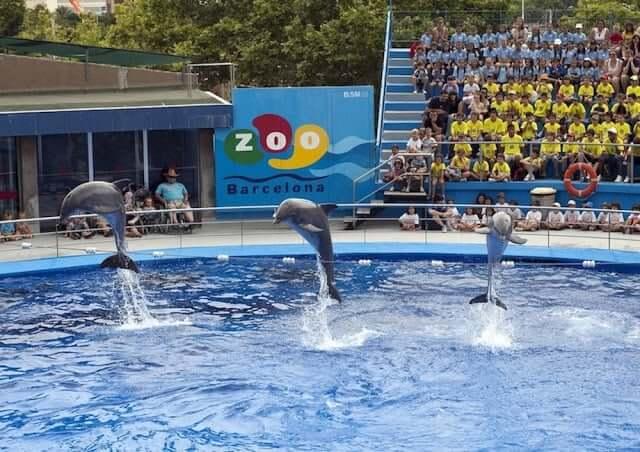 Espectáculo de los delfines en el Zoológico de Barcelona